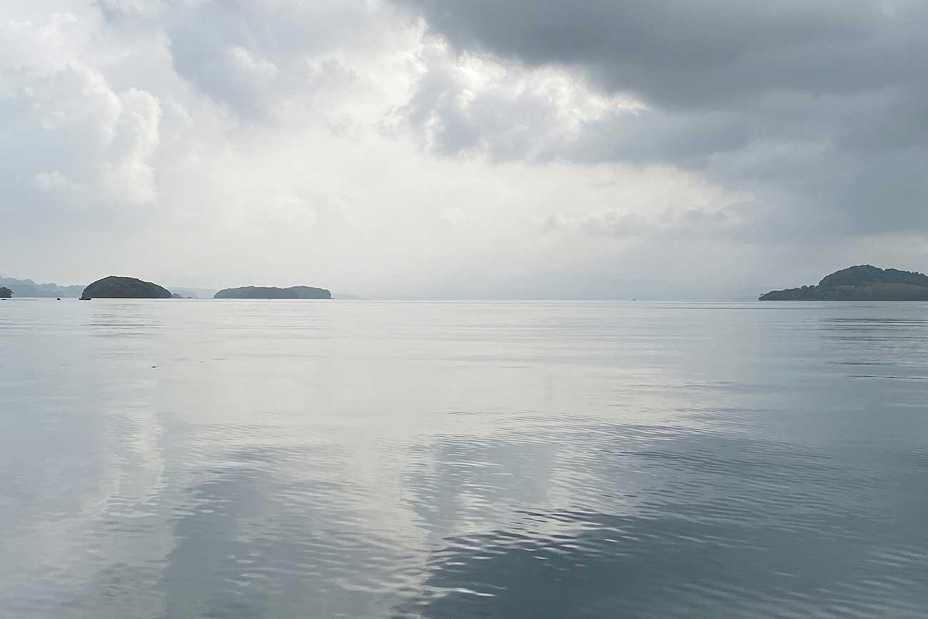 大村湾には様々な生き物が生息している。